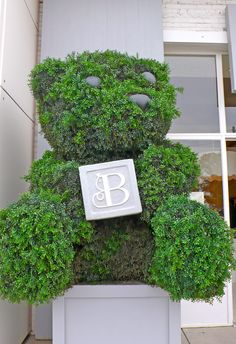 topiary teddy bear outside a children's store - too cute!