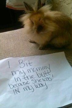 Rabbit Subscription Box - Bunny Box - Join The Club Cute Baby Bunnies, Funny Bunnies, Cute Funny Animals, Cute Baby Animals, Funny Rabbit, Pet Rabbit, House Rabbit, Bunny Meme, Bunny Bunny