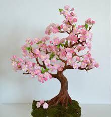 cherry blossom bonsai