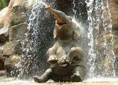 happiest little elephant!