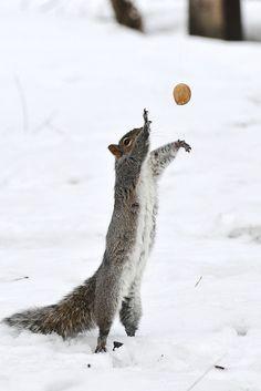 Serve the nut by Jonh Casey on Flickr ❉