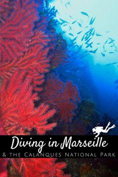 Parc National, National Parks, Marseille France, Destinations, Snorkelling, Parcs, Underwater Photography, Ocean Life, France Travel