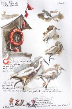 A Britain by the contours / Aber-benoît Watercolor Video, Watercolor Sketchbook, Artist Sketchbook, Watercolor Paintings, Watercolours, Illustration Botanique, Botanical Illustration, Bird Drawings, Animal Drawings
