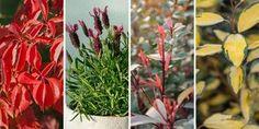 🌷 Με τον ερχομό της άνοιξης, η φύση γύρω μας ανθίζει και είναι ευκαιρία να ομορφύνουμε το μπαλκόνι μας! Επιλέγουμε τα 10 πιο ανθεκτικά φυτά για να φυτέψουμε σε γλάστρα ή ζαρντινιέρα και να δημιουργήσουμε τον δικό μας κήπο στο μπαλκόνι! Herbs, Plants, Gardening, Decoration, Decor, Lawn And Garden, Herb, Decorations, Plant