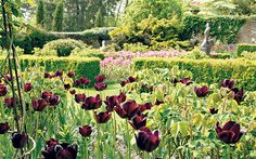 Tulips at Pashley Manor (Pashley Rd, Ticehurst, East Sussex TN5 7HE, United Kingdom)Photo: Tracey Whitefoot/Alamy