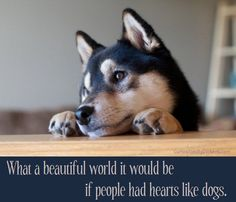 If people had hearts like dogs