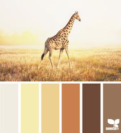 Bath Room Colors Bright Design Seeds 29 New Ideas Design Seeds, Colour Pallette, Colour Schemes, Color Combos, Giraffe Colors, Orange Design, Design Color, Yellow Bathrooms, Yellow And Brown