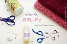 Wondering what to include in an emergency kit for your cavy? Baby Guinea Pigs, Guinea Pig Care, Pig Nails, Cool Mustaches, Guniea Pig, Pocket Pet, Grooming Kit, Animal Projects, Nail Clippers