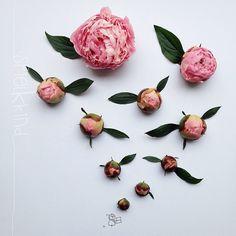 Science Nature, Peonies, Stud Earrings, Drawings, Flowers, Instagram Posts, Vases, Fill, Om