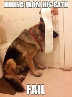 Hiding from his dog bath