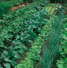 Gardening For Beginners Large Vegetable Garden Layout Plans Vegetable Garden Planner, Vegetable Garden For Beginners, Starting A Vegetable Garden, Veg Garden, Vegetable Garden Design, Edible Garden, Gardening For Beginners, Vegetable Gardening, Gardening Tips