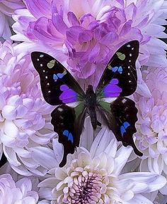 Mom, this is the same type of butterfly I gave you! God's creations are so spectacularly beautiful!