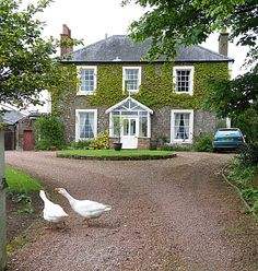 Georgian house…with geese having an argument …always have to spoil a picture HAHAHAHA