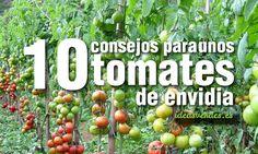 10 consejos para unos tomates de envidia