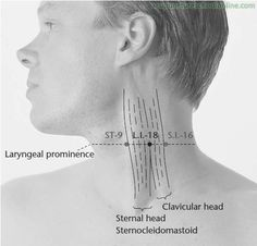 L.I.-18-Support-the-Prominence-FUTU-Acupuncture-Points-1.jpg 488×468 pixels