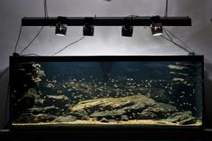 Aquascape by Haavard Stoere