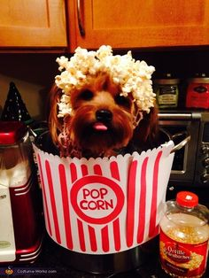 Tara: Lady is a small adorable yorkie! We had the cutest idea to make her into everyone's favorite and irresistible bucket of pop corn! We poped some plain pop corn, lightly...