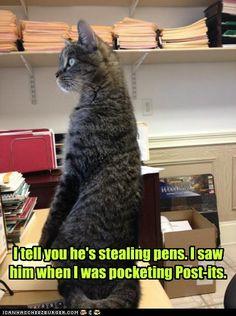 Hahaha! Cat humor