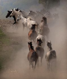 Fantastic photo! Horses .... free ( :