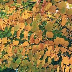 Autumn ♥ photo by Eva Sandner Gravesen