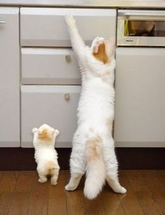 Kitten learning bad things from mother cat