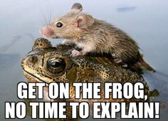 Get on the frog!