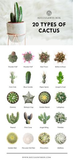 cactus plants types of, faux cactus plants, c. cactus plants types of, faux cactus plants, c.