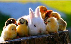 Bunny& chickies
