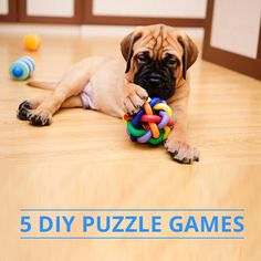 Treat your #dog to hours of fun and learning with these 5 #DIY Puzzle Games!