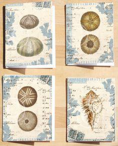 Cozy Fall Sale  Urchin Shell Collage Art Cards  by 1001treasures, $12.00