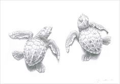 Prize donated by Geckoman in aid of Marine Conservation all in a Calendar for 2015 http://www.artdonor.org/