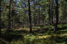 Light forest. Sandhamn Stockholms skärgård Sweden [OC][5184x3456]