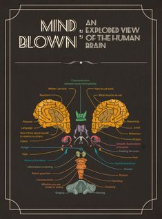 Mind Blown: An Exploded View of The Human Brain Infographic via visual. Brain Anatomy, Anatomy And Physiology, Human Anatomy, Info Board, Brain Science, Brain Injury, Brain Health, Mind Blown, Mindfulness