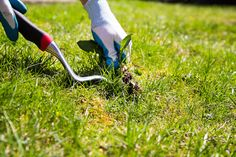 Les mauvaises herbes, un vrai cauchemar pour votre jardin ! Elles persistent et envahissent l'espace en quelques jours à peine. Il existe quelques astuces simples avec des produits naturels afin de lutter contre ces parasites des espaces verts. Car à moins d'avoir un ruminant chez soi, mieux vaut s'attaquer le plus vite possible à ces intruses.