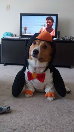 22 Times Corgis Proved They Are The Champions Of Halloween  It's a corgi dressed as a penguin!!!!!!!!! My brain just exploded from cuteness!!!!!!
