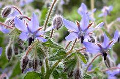 5 Fleurs Utiles au Potager   Conseils Jardinage Bio