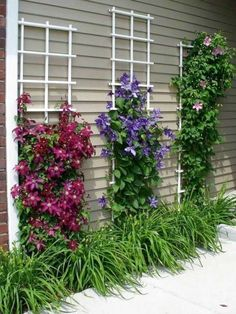 48 Ideas For Landscaping Ideas For Backyard Flowers Decks Flower Landscape, Landscape Design, Garden Design, Landscape Architecture, Diy Trellis, Garden Trellis, Trellis Ideas, Flower Trellis, Garden Planters
