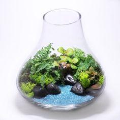 Bonsai Terrarium For Landscaping Miniature Inside The Jars 35
