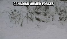 Meanwhile in Canada. We be popping outta the snow! LIKE DAISIES!