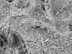 Ghost crab by Ann Parrick