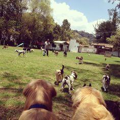 Pets Home, manada