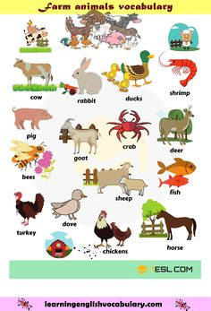 Learning the vocabulary for farm animals using pictures with English words Printable English Worksheets, English Worksheets For Kids, Vocabulary Pdf, English Vocabulary, Learning English, English Lessons, Animals For Kids, Farm Animals, Flashcards For Kids