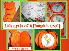 Pumpkin Craft: {Life Cycle of Pumpkin Craftivity} product from Sweet-Tea-Classroom on TeachersNotebook.com