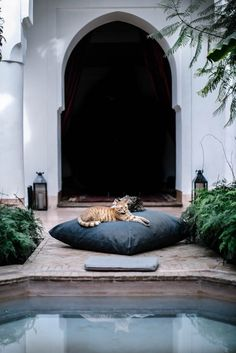 riad berbere cats marrakech morocco courtyard local milk retreat