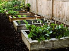 DIY Wooden Raised Garden Bed. I like the idea of having a few smaller boxes. Rather than one huge one.