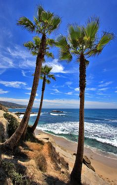 Laguna Beach Palms, California
