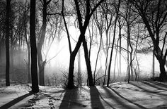 Morning Fog by Mark Heine Photos, via Flickr