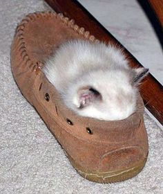 My cats spawn.  They would live shoes just as much as her :)