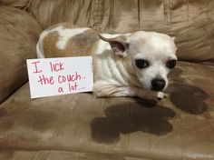 30 OF THE NAUGHTIEST DOGS! LAST ONE CRACKED ME UP!