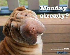 Monday already?! Dog Insurance, Pet Memes, Animal Memes, Photo Credit, Vip, Dog Cat, Australia, Quote, Pets